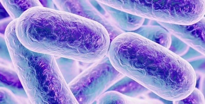 Listeria monocytogenes, una bacteria singular responsable del último brote de listeriosis