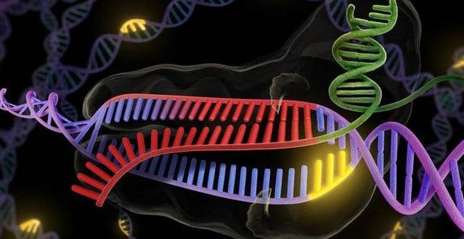 Tecnología CRISPR de última generación para analizar a gran escala el efecto de mutaciones puntuales