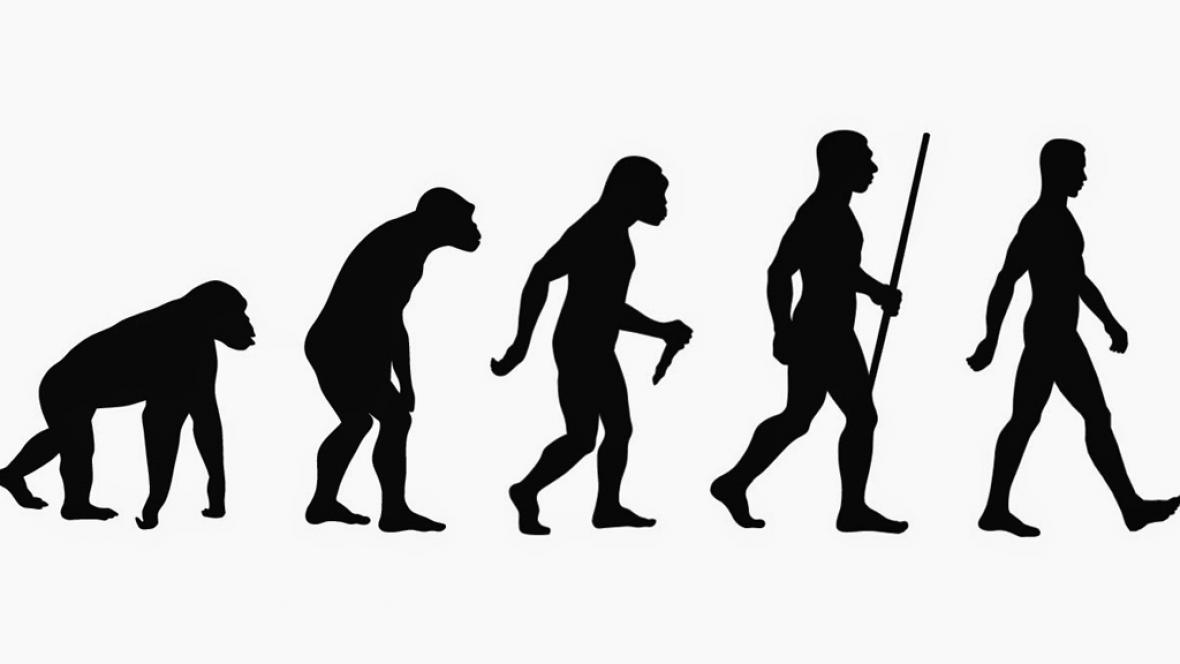 La evolución, conceptos básicos | Dciencia