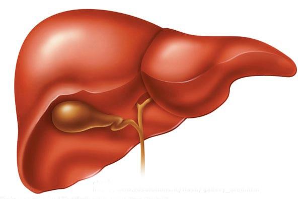 Cáncer de hígado. Cómo su estudio en ratones nos puede llevar a nuevos tratamientos