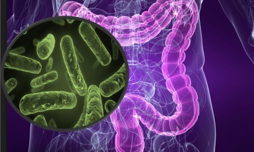 ¿En qué investigas? El diálogo molecular entre nuestras bacterias y el sistema inmunológico