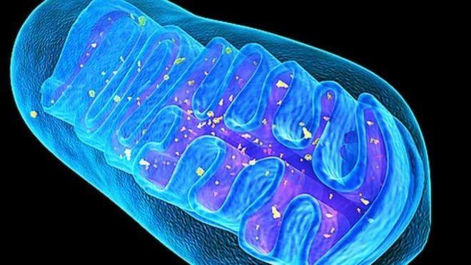 Disfunción-mitocondrias