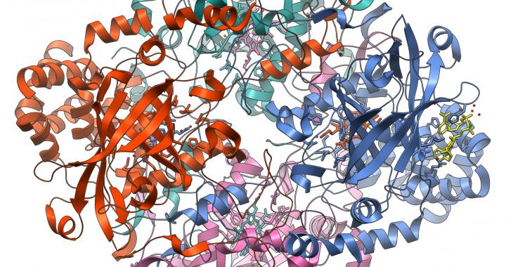 Aminoacidos y peptidos protein as para bajar de peso